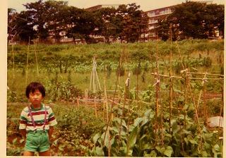 畑を借りていた頃。